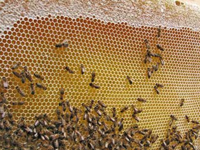 Новинка для пчеловодов